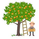 Orange Tree.jpg