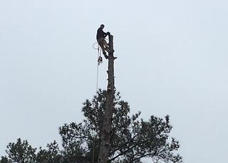 Macon Georgia Tree Service
