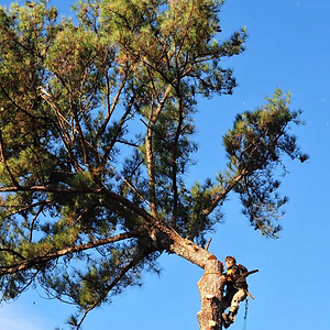 Doyle Bennett Tree Service
