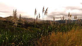 Sugarcane Field in Fiji | © Tourism Fiji