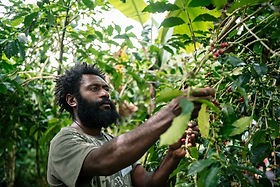 Coffee Cherry Training in PNG | © Fairtrade