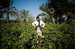 Fairtrade Cotton Farming India | © Fairtrade/ Simon Rawles