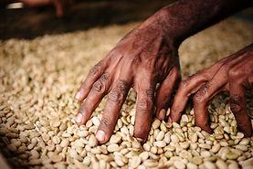 HOAC Coffee Co–operative, PNG | © Fairtrade