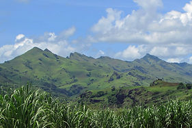 Sugarcane Fields in Vanua Levu  | © To Travel is to Live