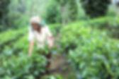 SOFA in Sri Lanka   © SOFA
