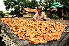 Cocoa Smallholder in Sulawesi, Indonesia | © ICRAF/Yusuf Ahmad