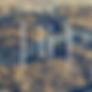 2iis Logo