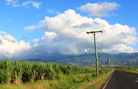 Cane Field in Vanua Levu | © Fairtrade