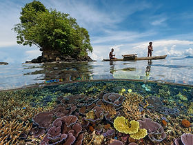 The Reef in Kimbe Bay