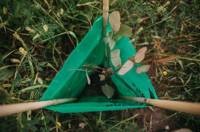Tree Planting in WA