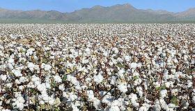 Cotton Farming in Kyrgyzstan | © Fairtrade