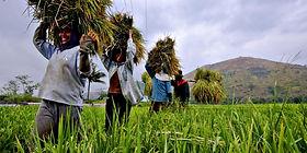 Farmers in the Philippines | © Veejay Villafranca |