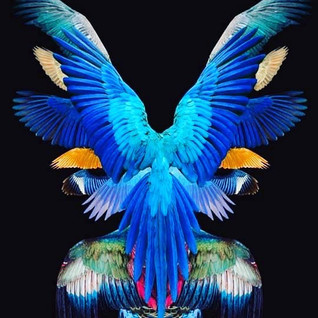 Be with us winged ones, in all your colors and diversity. Show us how to fly with purpose and beauty and make room for the winds of change. Singing for what we believe in with integrity in a glorious song of freedom and equality for all.