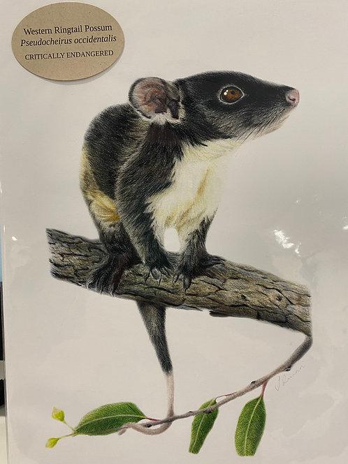 Jodie Quinn - Western Ringtail Possum