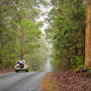 KARRI FOREST EXPLORER