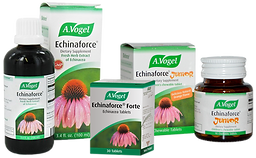 Vogel Echinaforce