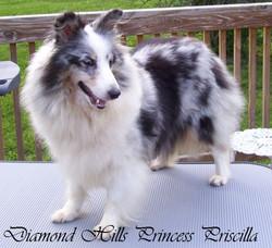 Diamond Hills Princess Priscilla