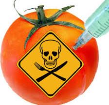 GMO Šta je to, zašto je opasno i šta nam je činiti?        I deo