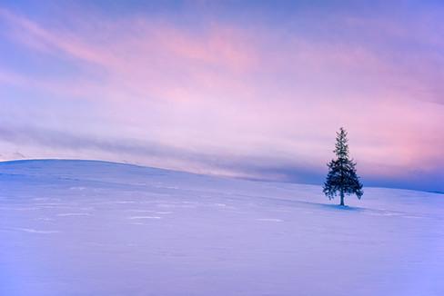 Hokkaido Christmas Tree