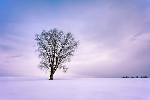Biei Philosophers Tree