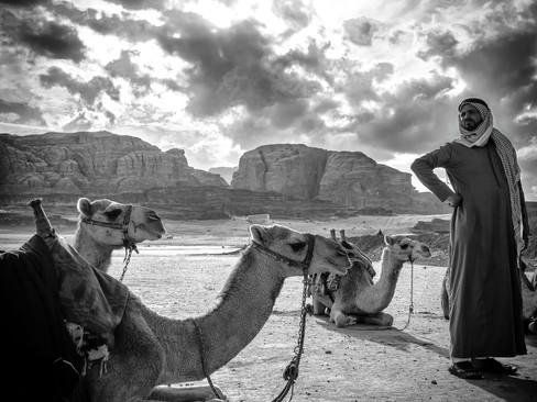 Camel awaits