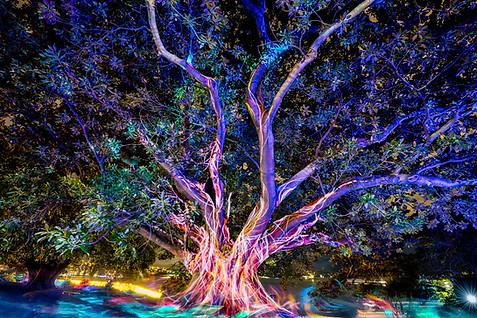 Sydney Botannical Garden