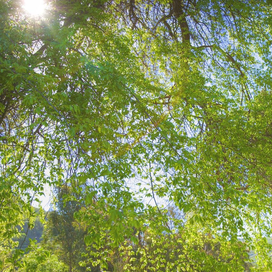 limelight 3.jpg