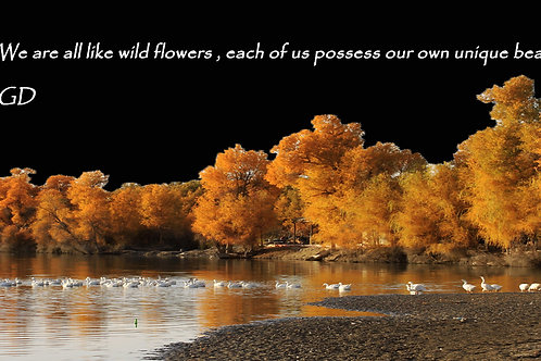 We are all like wild flowers