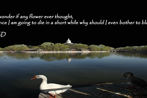 I wonder if any flower ever thought