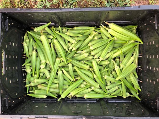 Dahmer farm pic. 3.jpg