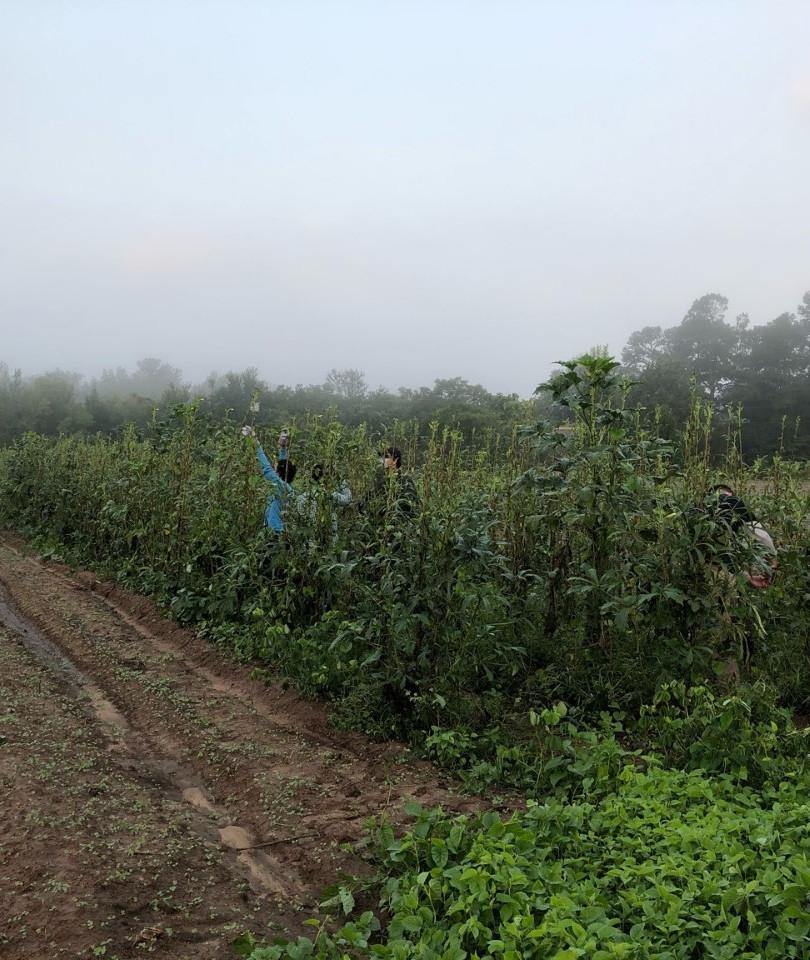 Dahmer farm pic. 2.jpg