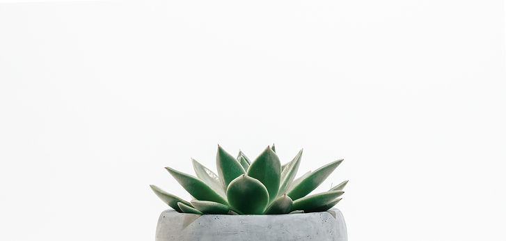 green%20succulent%20plant%20in%20gray%20