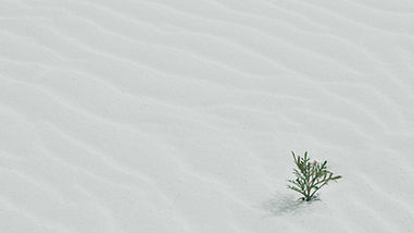 Fuerteventura%20plant%20in%20sand_edited