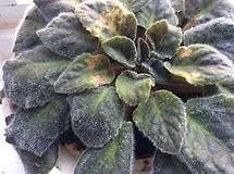 plant problem.jfif