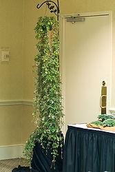 alsobia hanging plant.jpg