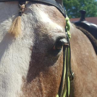 Why Horses?