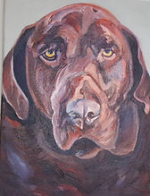 Chocolate Lab Oil Painting