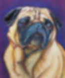 Pug Pet Portrait