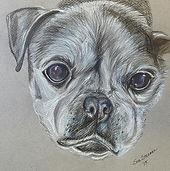 pug mix pet portrait by Sue Steiner