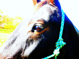 What my horse has taught me….