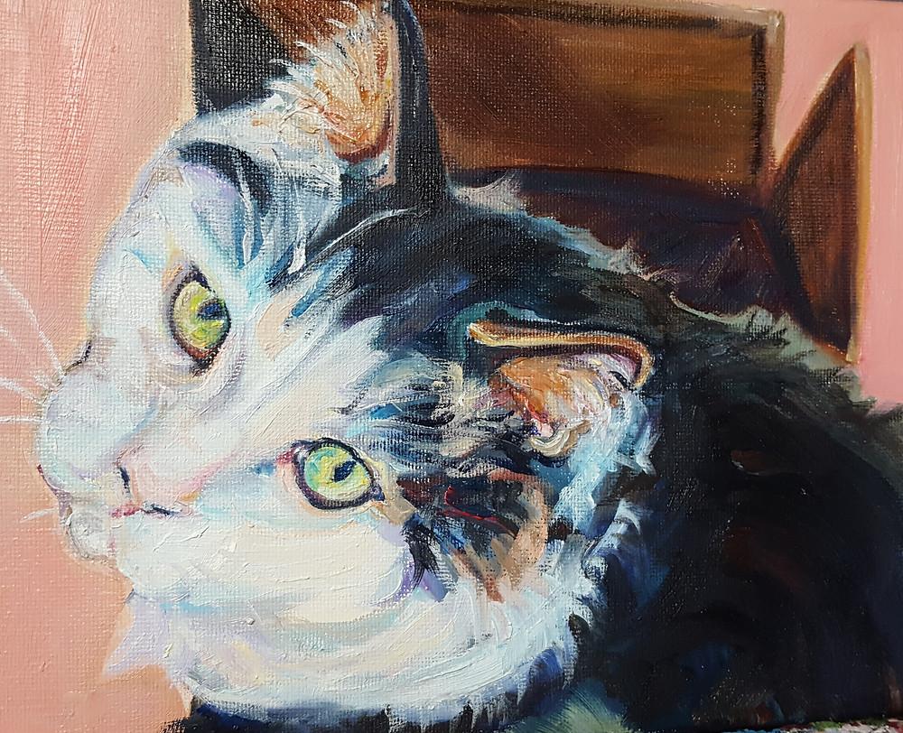 Longhaired Cat Portrait in Oils