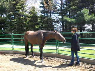 Equine Demo Report