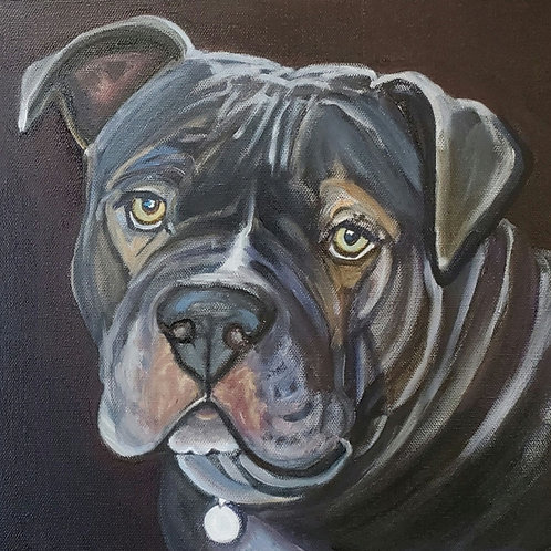 Pet Portrait Oil Painting