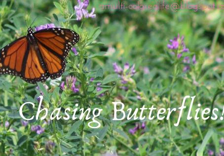 Chasing Butterflies!