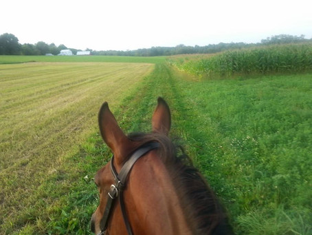 Overcoming Fear of Riding, Part I