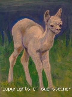 New Alpaca Art