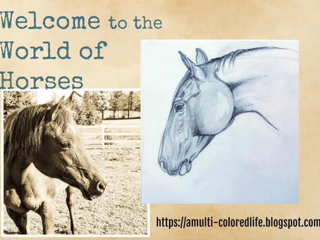 Welcome to the World of Horses!