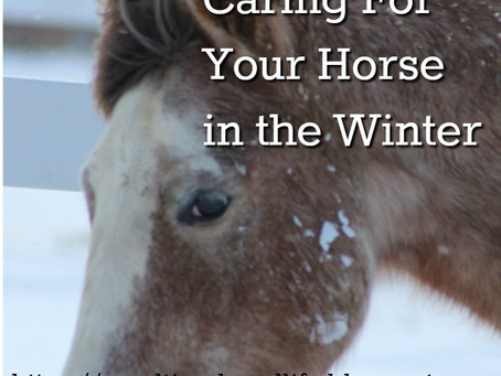 Caring For Your Horse in the Winter