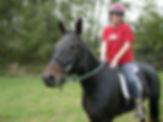 Horse artist Sue Steiner and her horse