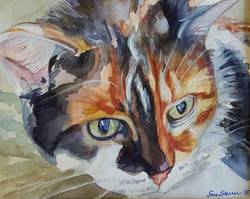 calico cat pet portrait